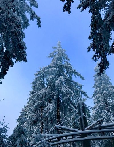 Wasserkuppe.exe 3 Germany Wasserkuppe Tree Winter Snow Cold Temperature Low Angle View Nature Day Beauty In Nature Mountain Weather Growth Outdoors Tranquil Scene Tranquility Blue Scenics Sky No People Clear Sky Branch Shades Of Winter