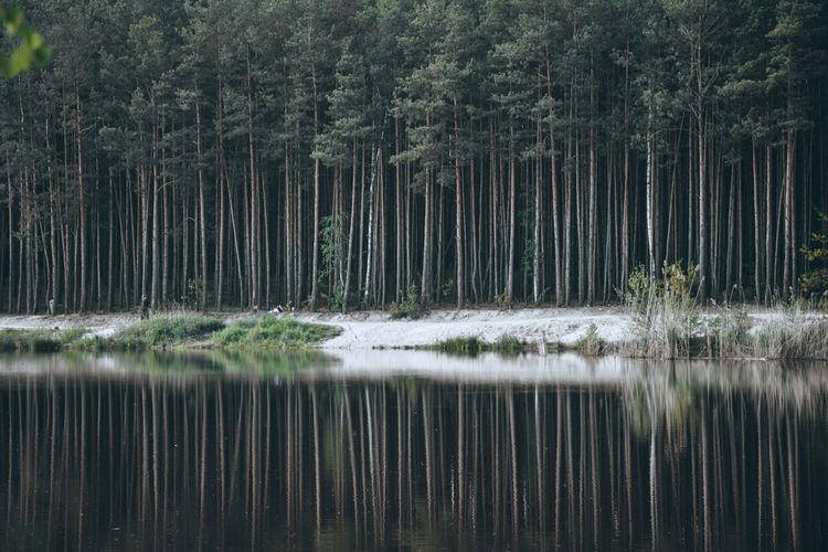 αℓтєя єgσ Exceptional Photographs Silhouette EyeEm Nature Lover Poland Forestwalk Reflections In The Water Reflection_collection Tree Water Forest Lake Reflection Grass Sky Pine Woodland Pinaceae