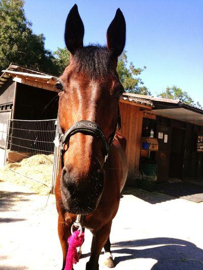 Horse <3 Qualoubet Pony❤️