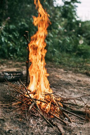 Bonfire on field in forest
