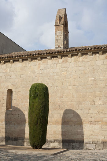 Group of cypress tress beside a stone wall of an ancient Poblet Monastery in Catalonia, Spain Cypress Cyprus Monastery Poblet SPAIN Wall Architecture Building Exterior Built Structure Day History Lleida Religion Sky Travel Destinations