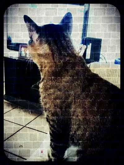 He Loves Nascar! Cat Watching Cat Watching TV My Cat Mobile Photography Cat Lovers Catching A Show Cute Cats