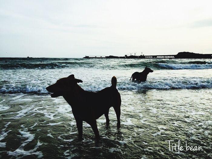 หมาทะเล....