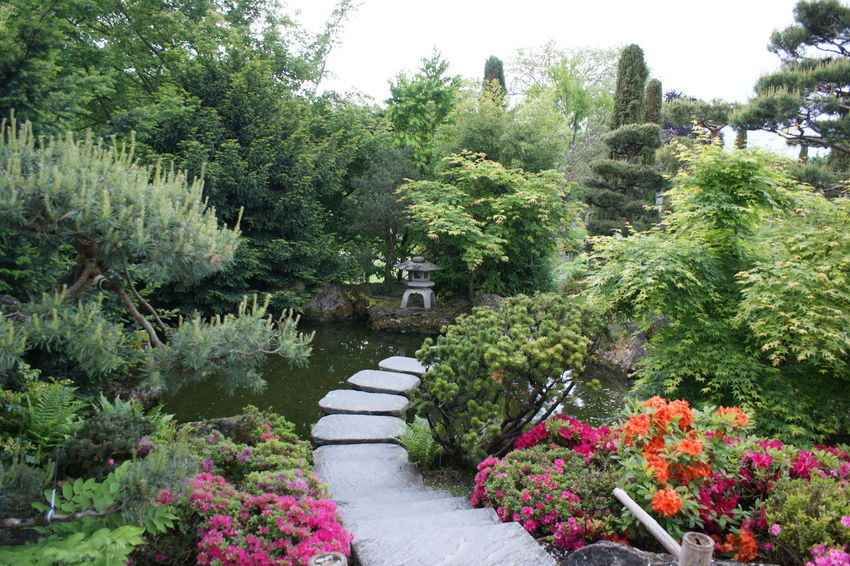 Asian Garden Asian Gardens Asian Park Lush Foliage Relaxing Moments Stepping Stones Stone Path Tranquility Water Garden