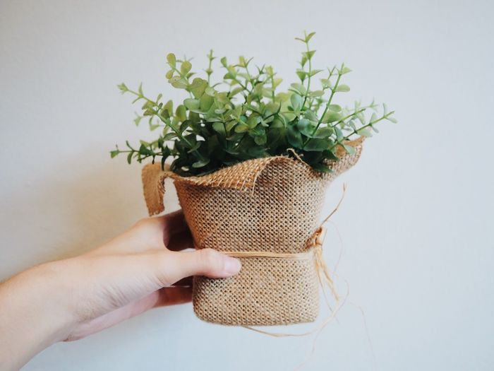Close-Up Of Human Hand Holding Plants In Burlap Against Wall