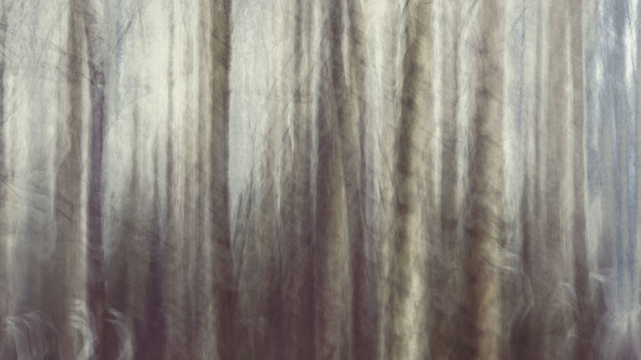 Hello World Taking Photos Tree Abstract Architecture Backgrounds Close-up Curtain Day Extreme Close-up Full Frame Gray Indoors  Material Motion No People Pattern Striped Textile Textured  White Color Wool