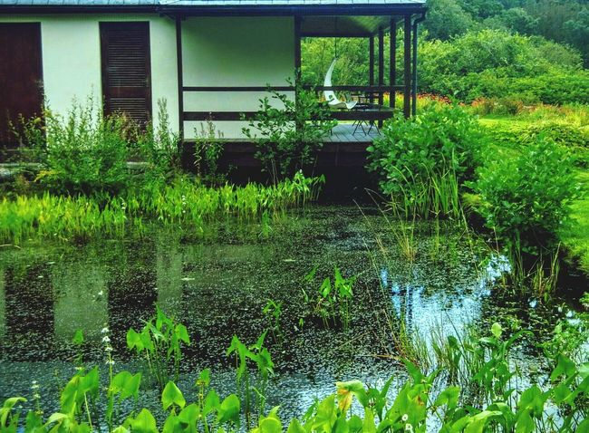 Beside the pond Pond Pond Plants Pond Reflections Verandah Veranda Verandahview Verandaview Porch Minimalist Architecture Liss Ard West Cork Wildatlanticway Ireland