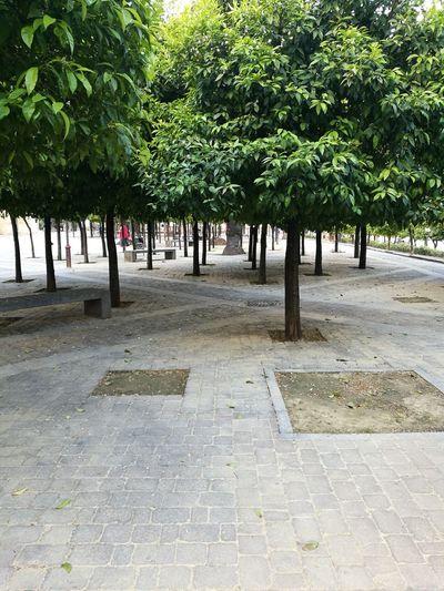 Jerez De La Frontera, Spain Jerez De La Frontera EyeEmNewHere Tree Calm Tranquility Treelined Tranquil Scene Tree Trunk