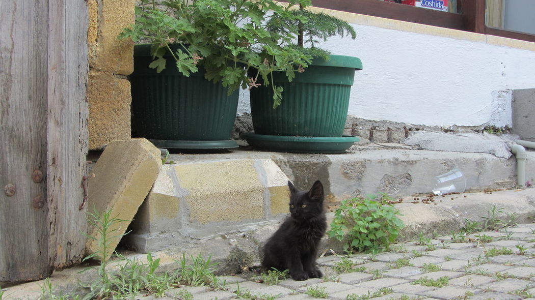 Cyprus Cyprus Cat Nikosia Animal Themes Architecture Building Exterior Built Structure Cat Day Domestic Animals Domestic Cat Feline Growth Leaf Mammal Nature No People One Animal Outdoors Pets Plant Potted Plant Sitting