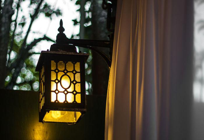 Green Color Light Plants Romantic Close-up Day Dreamy Eyem Best Shots Illuminated Lantern No People