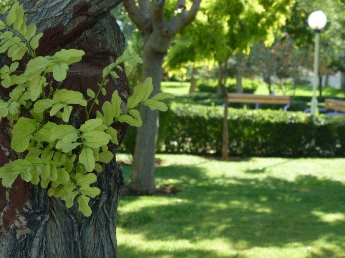 Tree Embracing This Natural Thing .! :)