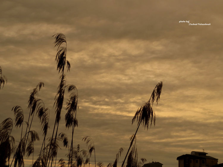 Guilin Guilan 😊💝😏 Good Night City Lagoon Iran Street Photography Port Of Anzali Iran Canon Canon Sx50 گیلان بندر_انزلي