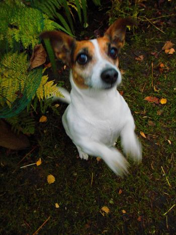 Capturing Movement Taking Photos Check This Out Dog Jackrusselterrier Autumn🍁🍁🍁