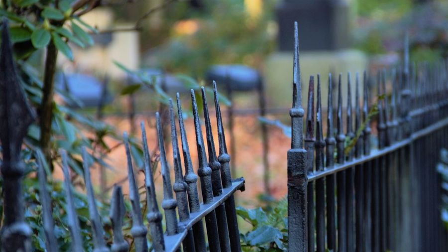 Close-up of metal fence against plants in yard