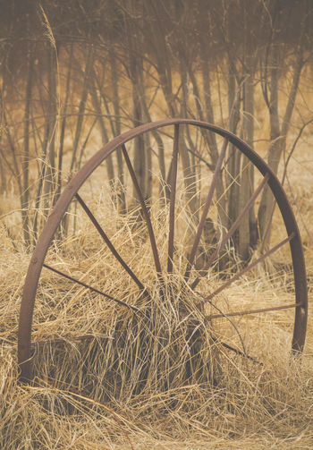 Abandoned Abandoned Farm Bygone Days Close-up Day Field Golden Grass Grass Grassy Hay Nature No People Ontario, Canada Outdoors Overgrown Plow Plow Wheel Rusty Rusty Metal Rustygoodness The Week On EyeEm Vintage Vintage Moments Wheel