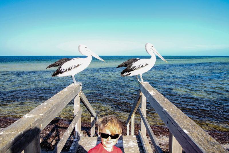 Birds perching on beach against clear sky