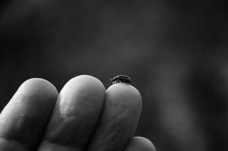 Close-up of bug on finger