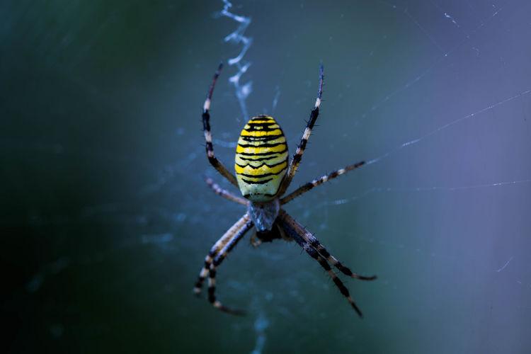 Macro shot of spider on web