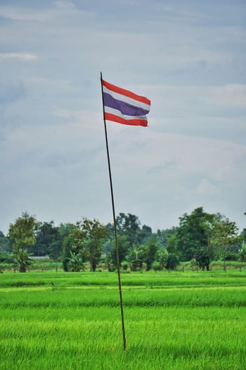 Rice Field Thailand Sky Environment Flag Patriotism Cloud - Sky Nature Plant Field Land Green Color