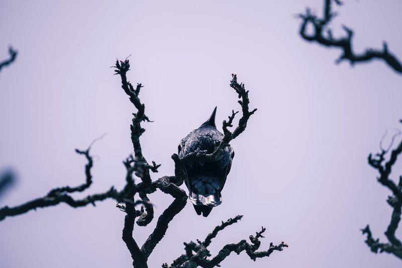 ©️885 Crow.