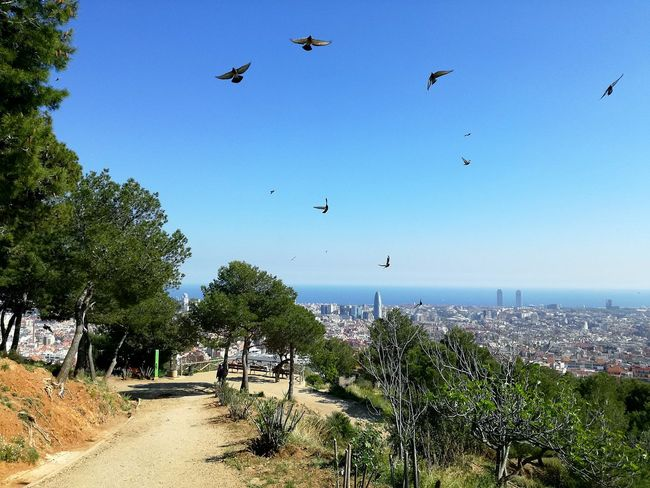 Tree Sky Outdoors Nature Day Bird Beauty In Nature Animal Themes Flying High Cityscape No People Springtime Blue Sky Sunny☀ Mediterranean  Sea Catalunya BCN Barcelona Nature