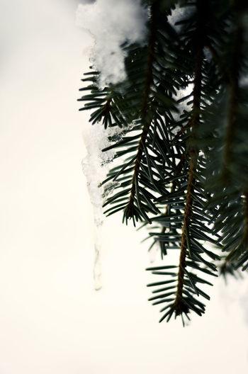 50mm Ice Nikon