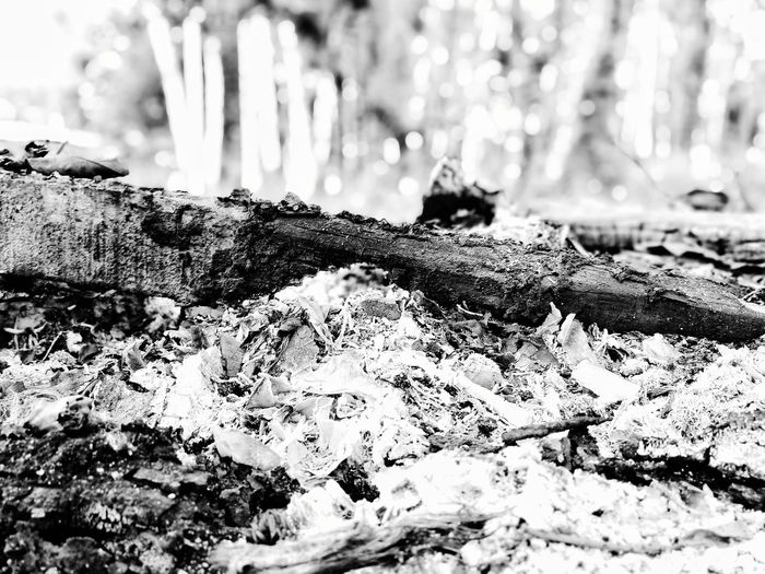 Close-up of tree trunk on snow covered field
