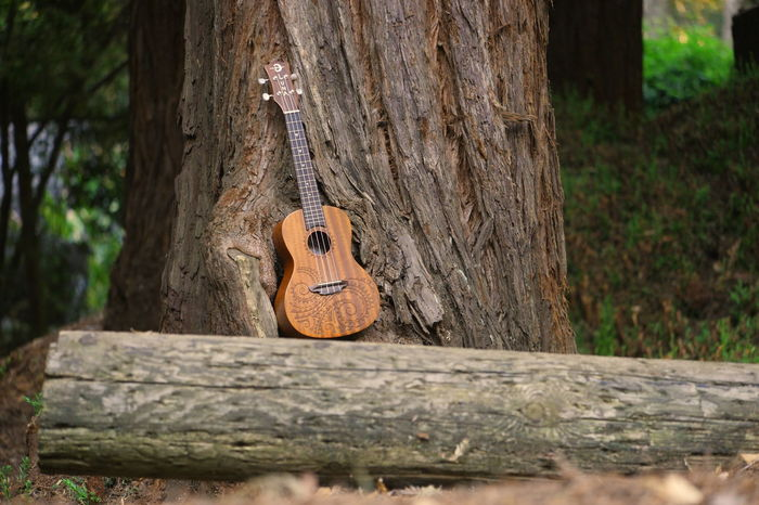 Tree Trunk Music Arts Culture And Entertainment Musical Instrument No People Day Tree Outdoors Guitar Nature Ukedaily Uke Ukelele Stringed Instrument