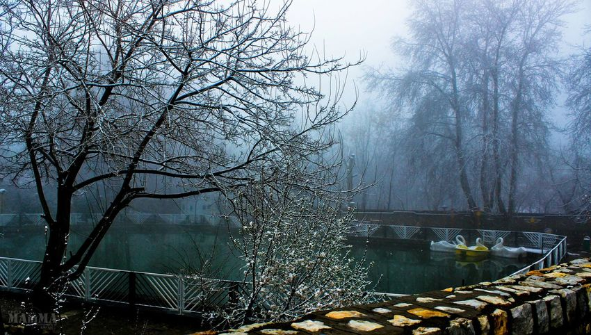 Iran kashan_niasar Smog Hello World EyeEm Best Shots - Trees Beautiful Smog Snow Trees Cold Days Winter Winter Trees