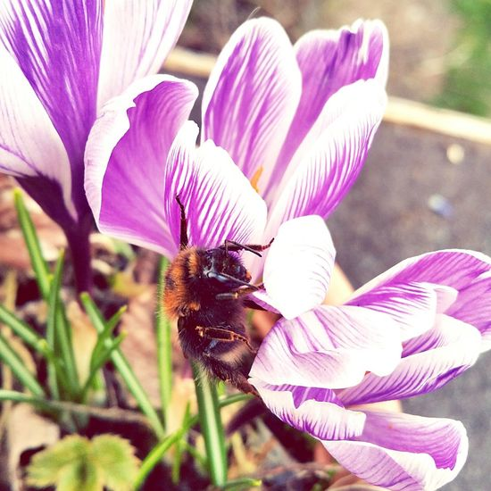 Bees Garden Photography Wildlife Tiny Planet Insects  Plants