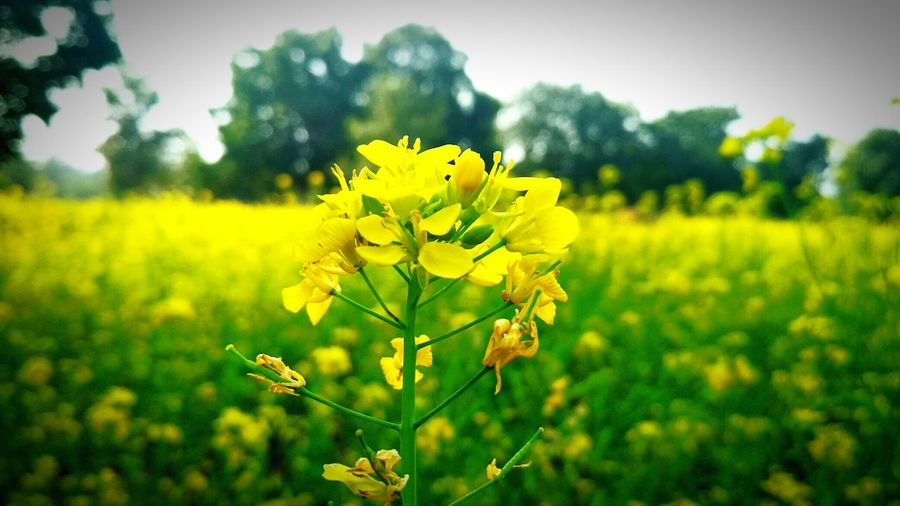 Flower Nature Plant Field Blossom Growth Beauty In Nature EyeEmNewHere