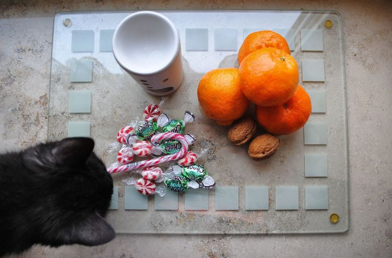 Christmas Decorations Christmas Around The World Christmas MerryChristmas CDRE Cats Cat Pets Photobomb Sweets Close Up Arrangement Fruits Tangerine Nikon Creativity Decoration EyeEm Masterclass Eye4photography  Animals Nuts Large Group Of Objects Cat Lovers Curiosity Geometric Shapes Colorful