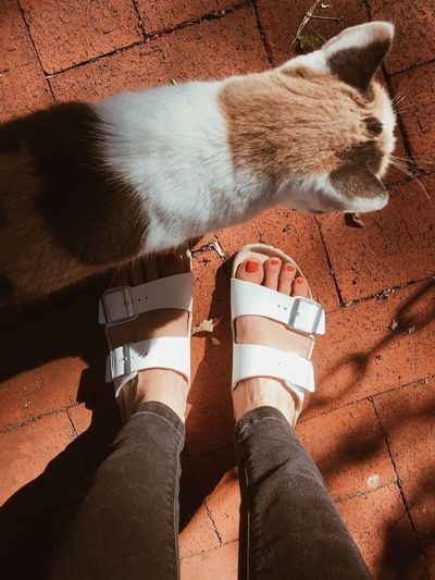 Outdoors Summer Sandals Birkenstock Feet Cat Tiles Human Leg Body Part Real People Relaxation One Person Personal Perspective Human Body Part Animal Sunlight Vertebrate Animal Themes Day