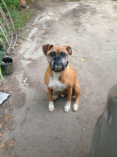 cutiest 11 yr old dog yet
