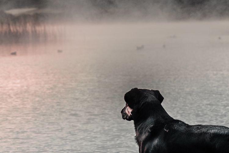 Dog looking at