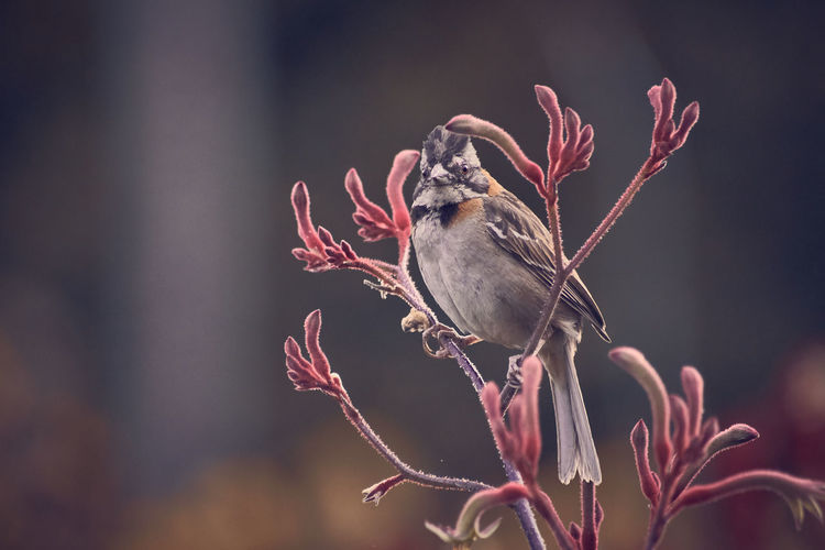 Close-up of bird perching on flower