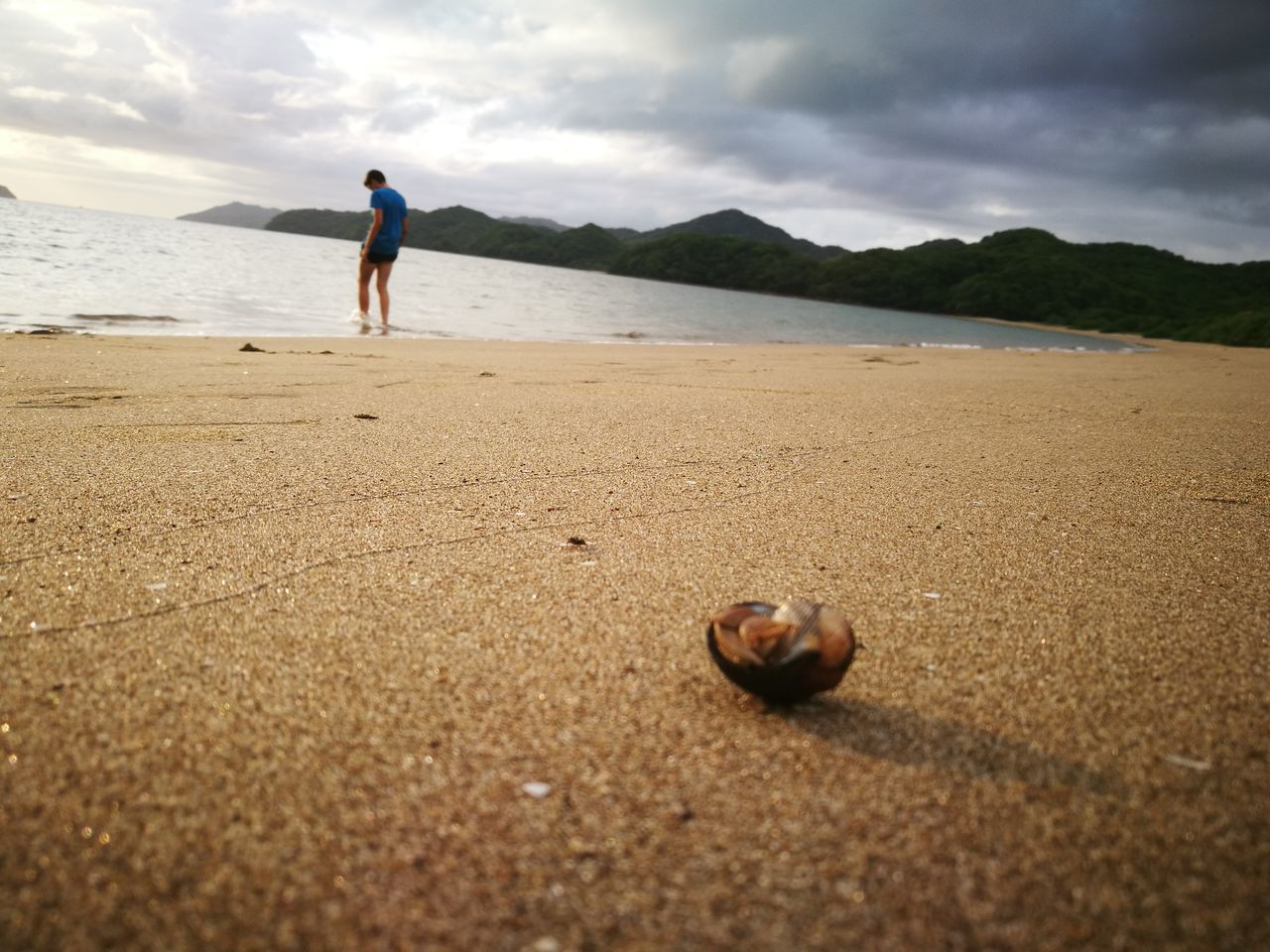 Surface Level View Of Animal Shell On Sand With Man At Beach Against Cloudy Sky