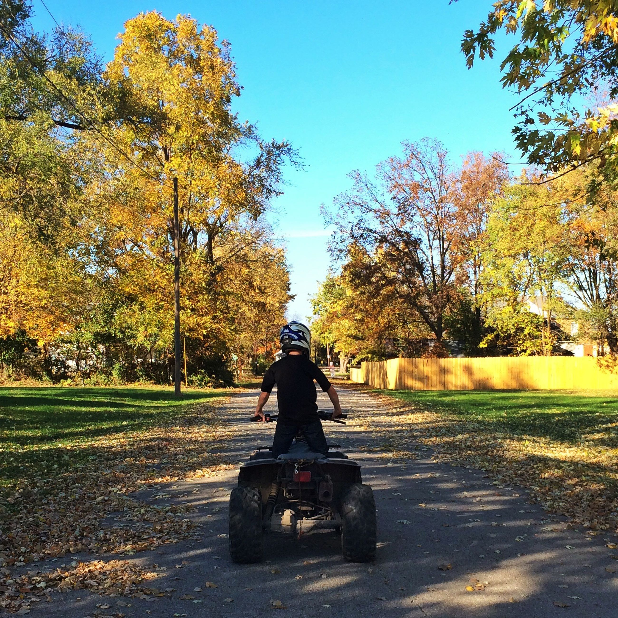 tree, clear sky, full length, lifestyles, rear view, leisure activity, men, autumn, park - man made space, grass, sunlight, road, walking, transportation, person, change, street, growth