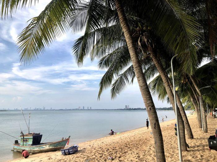 Water Tree Palm