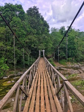 Tree Sky Day Cloud - Sky No People Outdoors Connection Wood - Material Nature Growth The Way Forward Bridge - Man Made Structure Green Color Footbridge Forest Beauty In Nature Photography Jaysalvarez