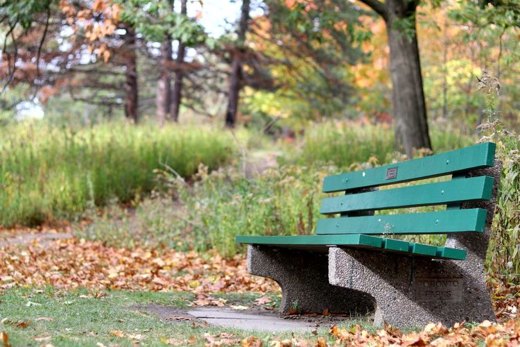 Close-up of bench
