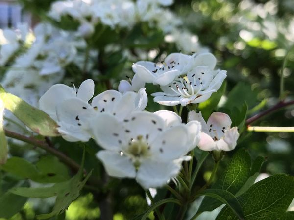 Flower Plant Flowering Plant Growth Beauty In Nature Petal Fragility