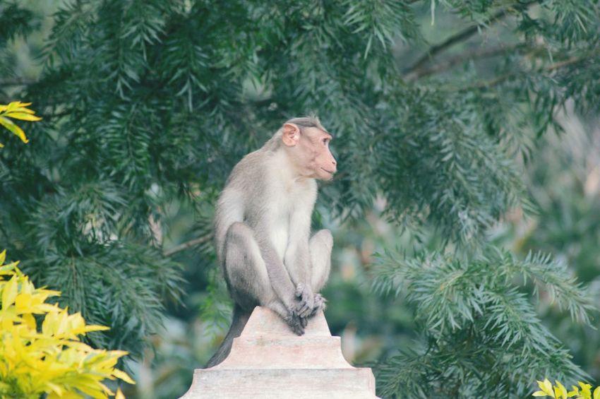 Monkey on the block Monkey Animal Wildlife Monkey Animal Animals In The Wild Outdoors Mammal Day Plant Tree Nature Animal Themes No People One Animal Sitting EyeEmNewHere