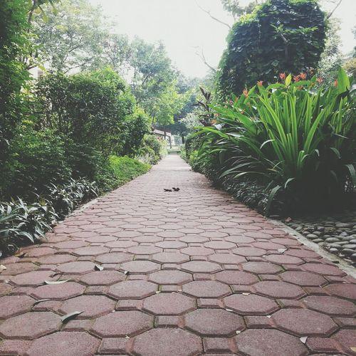 Road Pathway