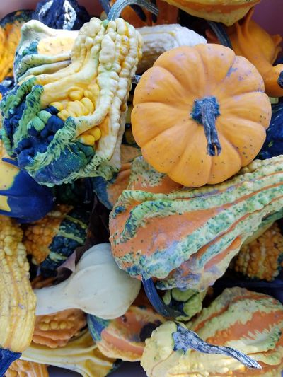 Colors of fall. Autumn Colors Photo Of The Day Check This Out Eyemphotography Gourds Squash Pumpkin Abundance Fruits