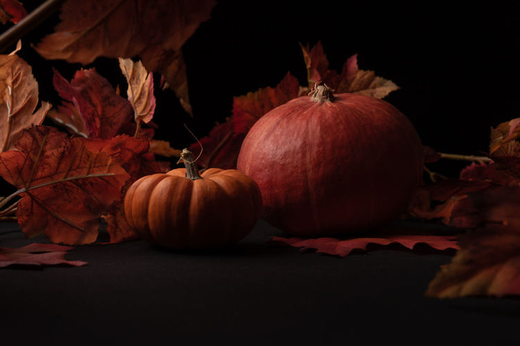 Autumn Black Background Celebration Leaf Leaves Nature No People Orange Color Plant Part Pumpkin Still Life Vegetable