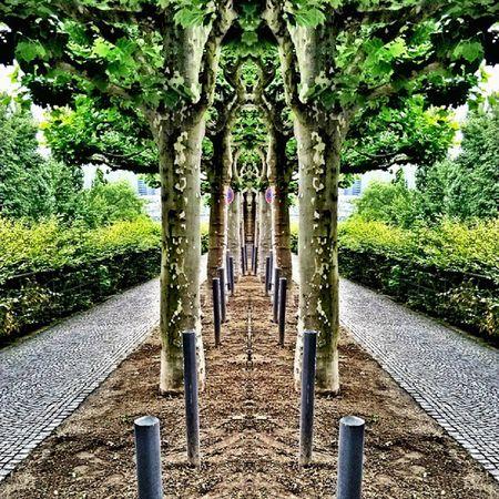 Trees Afghanistan Kabul Kandahar deployment Germany b_ig lgintuition latergram panorama park statigram webstigram world_captures wu_europe worldingram igdaily igersworldwide ig_snapshots igser igtoppics igphoto ig_fotogramers igerstoulouse instahub instagreatestshots