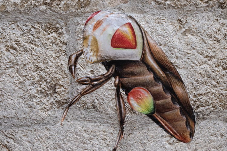 Bug painted on Wall, Dubrovnik Bug City Composition Croatia Fun Unusual Wall Animal Representation Brown And White Colours. Close-up Dubrovnik Full Frame Insect Nature No People Outdoor Photography Painting Scary Still Life Travel Destination Wall - Building Feature Wall Feature