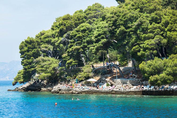 Scenic view of adriatic sea against trees at cavtat