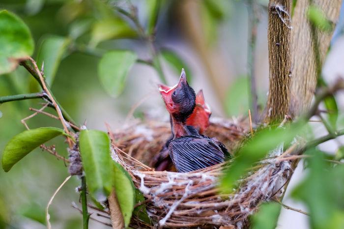 Animal Bird No People Animal Themes EyeEm Best Shots Bird Nests